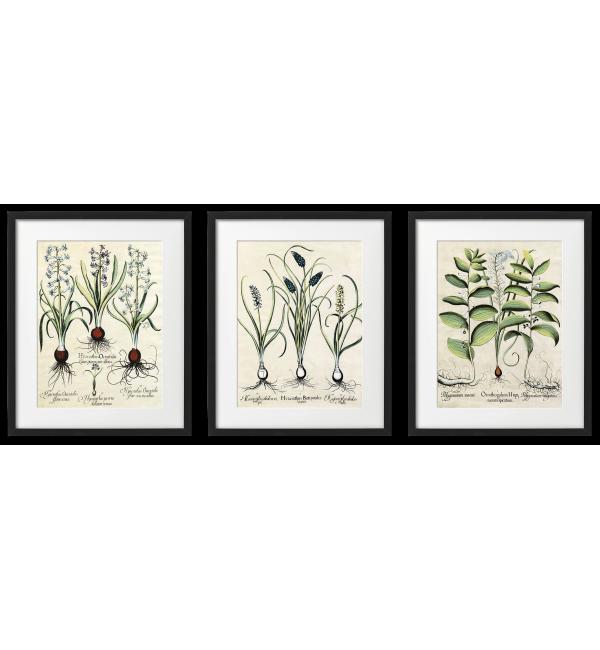 BULB PLANTS, BOTANICAL POSTERS