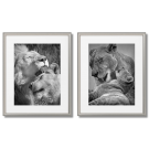 BLACK AND WHITE POSTERS OF FAMILY OF LIONS