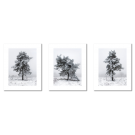 TREES: A SET OF 3 POSTERS