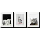 FORNASETTI - CATS