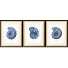 BLUE NAUTILUS SHELLS