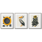 SUNFLOWERS WITH A PELICAN VINTAGE POSTERS
