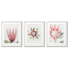 PROTEA CYNAROIDES - BEAUTIFUL FLOWER, DELICATE POSTERS