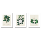 BEAUTIFUL BOTANICAL VINTAGE POSTERS, WHITE FLOWERS