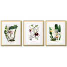 ORCHIDS, WHITE FLOWERS, BOTANICAL POSTERS