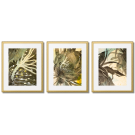 OLIVE-BROWN ABSTRACTIONS FROM NATURE - REPRODUCTION