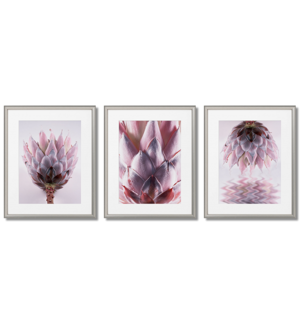 PROTEA FLOWER 3 PINK POSTERS