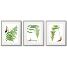 POSTERS WITH FERNS