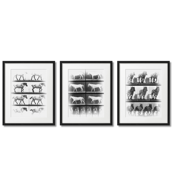 MOVEMENT OF HORSES, POSTERS WITH HORSES