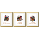 PARROTS - POSTERS FROM ATLASES