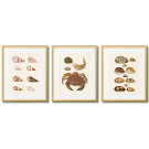 CRAB AND SHELLS VINTAGE POSTERS